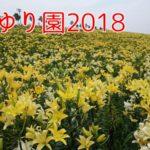 【割引料金もあり!】舞洲ゆり園(大阪)2018年の見頃やアクセス方法は?