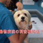 【詐欺に要注意!】動物病院の料金相場と実際に掛かった費用について