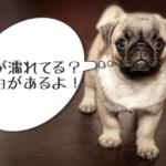 犬の鼻が濡れているのは病気なのか?乾くと危険のサインって本当!?